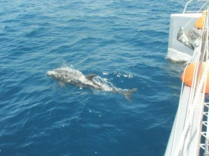Spirit Of Lauderdale Ski, Spalsh and Snorkel dolphins